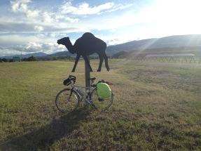 Skye travels with camels.
